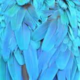 Macaw feathers. Scarlet Macaw feathers background texture Stock Images