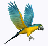 Macaw Flying. A macaw in flight. This is a 3D render that I created with Poser and Photoshop