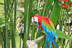 Macaw i tropisk natur royaltyfri fotografi
