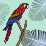 Macaw illustration drawn in pen with digital color stock illustration