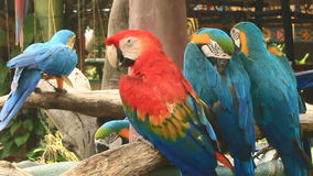 Macaw in nature stock video footage