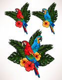 Macaw and palm leaves Stock Images