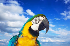 Macaw papagay against sky Royalty Free Stock Photo