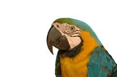 Macaw-Papagei Stockbilder