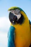 Macaw-Papagei stockfotografie
