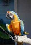 Macaw parrot. Sitting on a log Stock Photo