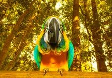 Macaw parrot Stock Photos