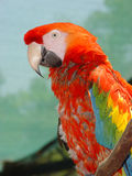 Macaw Parrot Royalty Free Stock Photos