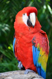 Macaw parrot bird Royalty Free Stock Photos
