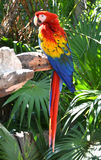 Macaw parrot bird Stock Photos