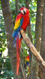 Macaw parrot bird Stock Photo