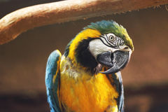 Macaw Parrot Stock Images