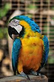 Macaw parrot Stock Photography