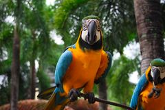 Macaw parrot. Colourful bird sitting on the branch Royalty Free Stock Images