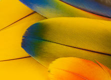 Macaw parrot feathers Stock Photography