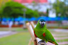 Macaw parrot, green colorful beautiful in public park select focus with shallow depth of field.  stock photos