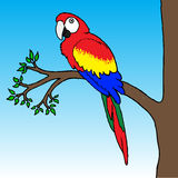 Macaw Parrot Illustration. Colorful macaw parrot sitting on branch Stock Photography