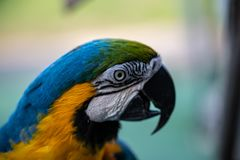 Macaw Parrot Looking Aside stock image