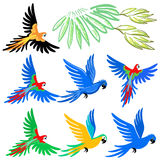 Macaw parrot pattern set Stock Image