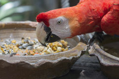 Macaw parrot red tree jungle exotic wildlife Stock Images