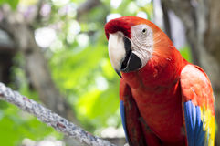 Macaw parrot red tree jungle exotic wildlife Stock Photos