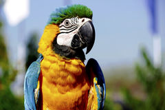 Macaw parrot. Shot taken at indore zoo Stock Images