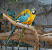 Macaw parrot stock photos