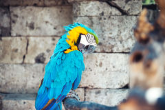 Macaw parrot sitting in forest. aviary details of rainforest Royalty Free Stock Photo