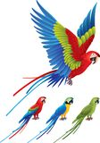 Macaw parrot spread wings and tree sitting Aras Stock Photography