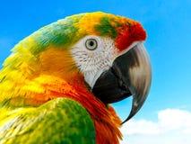 Macaw Parrot Tropical Bird Stock Photos