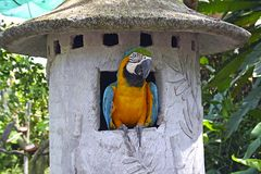 Macaw parrot in tropical park, Bali Stock Photos