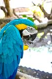 Macaw parrot  on white background Stock Images