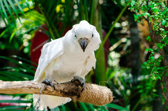 Macaw parrot Stock Image