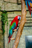 Macaw parrot. At the zoo. bright beautiful parrot Stock Photos
