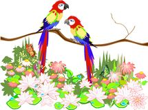Macaw parrots Stock Photos