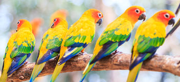 Macaw parrots. Colorful macaw parrot on the branch Stock Photography