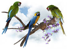 Macaw Parrots Perching Royalty Free Stock Photos