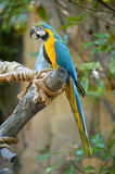 Macaw Perched on Tree Stock Photos