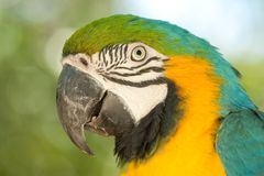 Macaw portrait Stock Photography