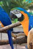 Macaw Portrait Stock Image
