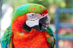 Macaw portrait Stock Images
