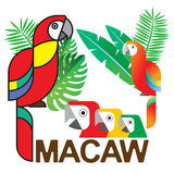 Macaw Set1 Στοκ Φωτογραφίες
