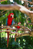 Macaw sitting on branch Stock Photo