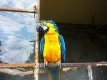 Macaw sitting on the window reflecting blue sky. Stock Images