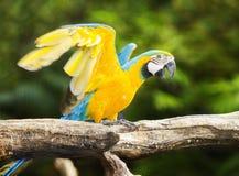 Macaw sur le branchement images stock