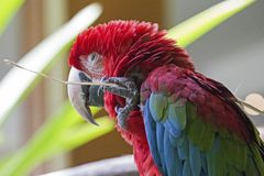 Macaw Tool Royalty Free Stock Photos