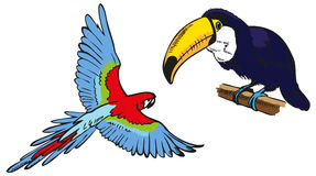 Macaw and toucan Royalty Free Stock Photography