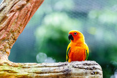 Macaw on the tree Stock Images
