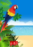 Macaw with tropical beach background Royalty Free Stock Photo