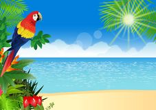 Macaw with tropical beach background Stock Photography